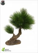MINI BONSAI PINUS 25cm (artificial trunk)