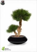 PINE BONSAI DELUXE h 55 a tree trunk