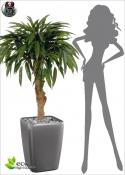 ROYAL longifolia Artificial BONSAI DELUXE 90CM