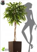 Longifolia Artificiale LUX Umbrella H. 180cm