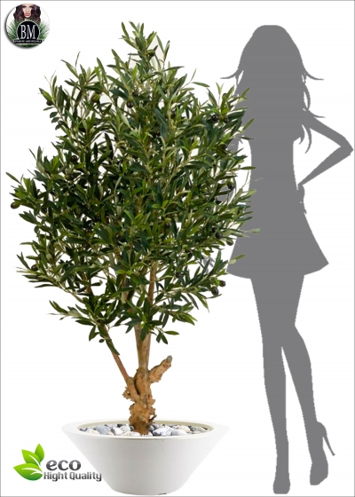 The olive tree Artificial Natural Twisted tree Fruit Three Measures