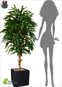 Longifolia Artificiale ROYAL MED DELUXE h 165