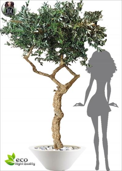 The olive tree Artificial LUX Special Trunck Umbrella H. 275
