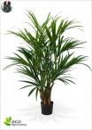 Kentia Palm Lux Large H. 180cm
