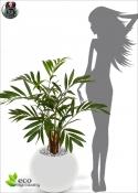 Palma Artificiale Chamaedorea Lux H.85cm