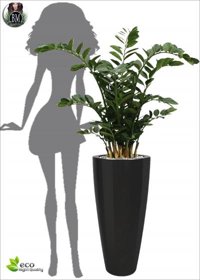 Zamifolia Artificiale XL H. 120cm