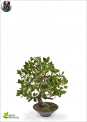 Wiandi ficus Artificial Bonsai In pot 45 cm