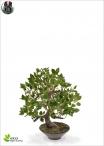 Ficus Bonsai Wiandi Artificiale In vaso 45cm