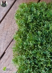 ARTIFICIAL MOSS PANELS - Panels of 25x25m Lime Green
