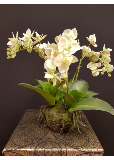 ARTIFICIAL ORCHID PHAL.BELLX4 C/VASE H. 40cm REAL TOUCH